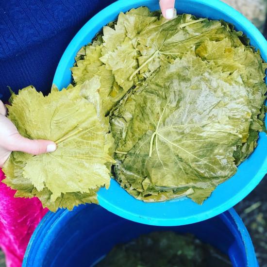 Asma Yaprağı Tokat 3200 gr
